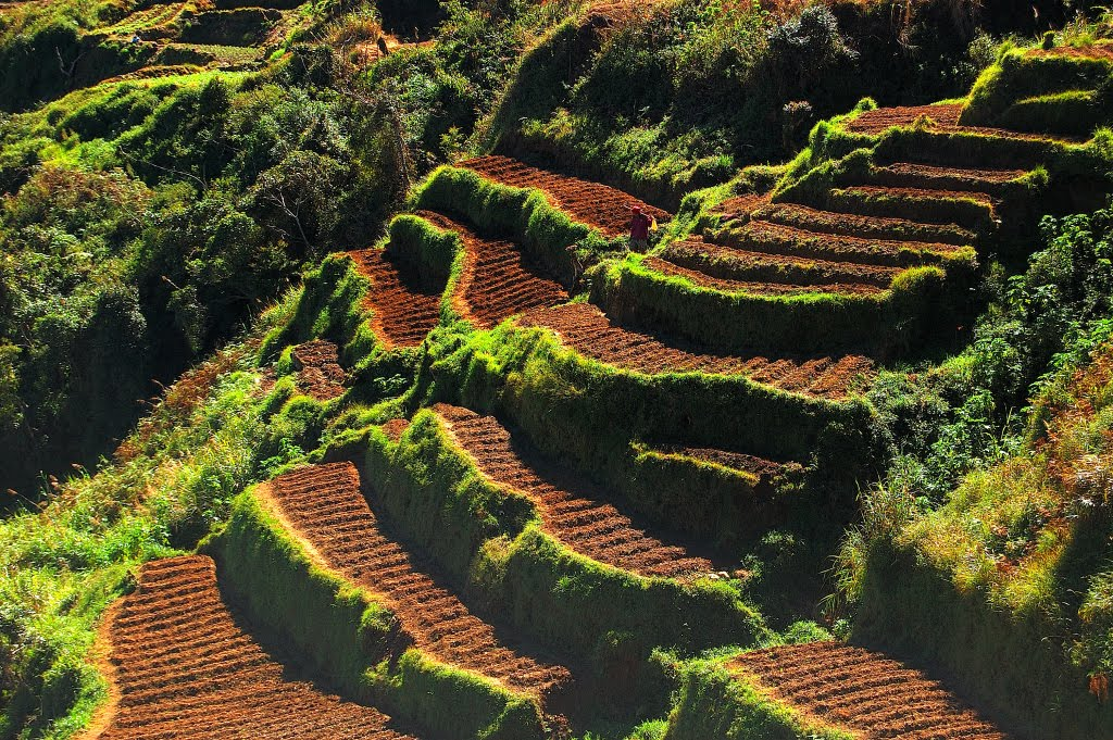 50 amazing and beautiful terrace farming for Define terrace farming