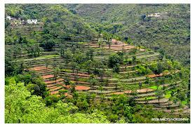 50 amazing and beautiful terrace farming for Terrace farming diagram