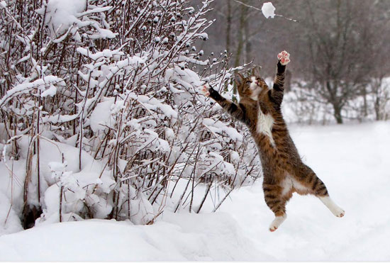 Catch the snow