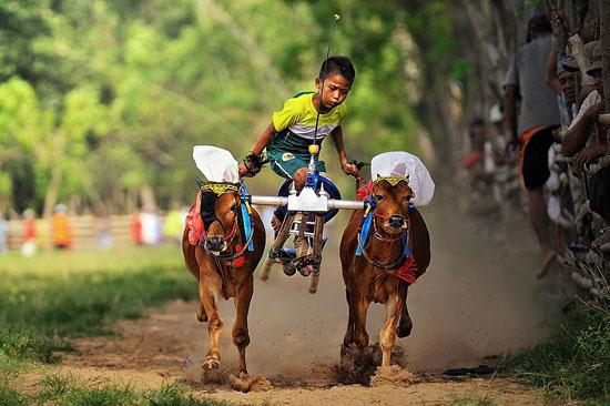 Little jockey in action