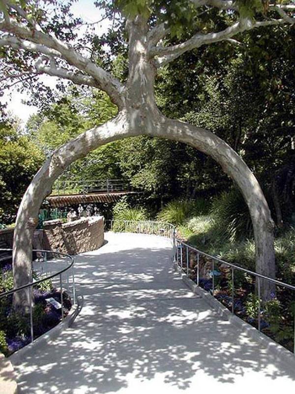 Stunning Art of Arborsculpture-1
