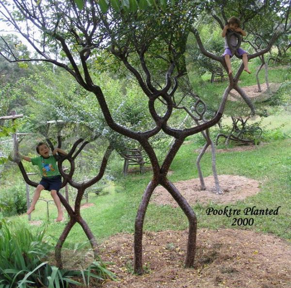 Stunning Art of Arborsculpture-17