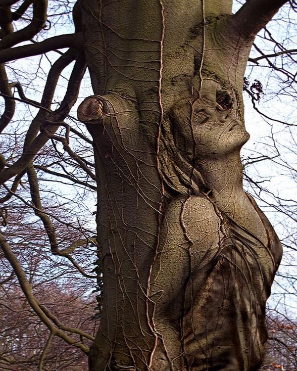 Stunning Art of Arborsculpture-2
