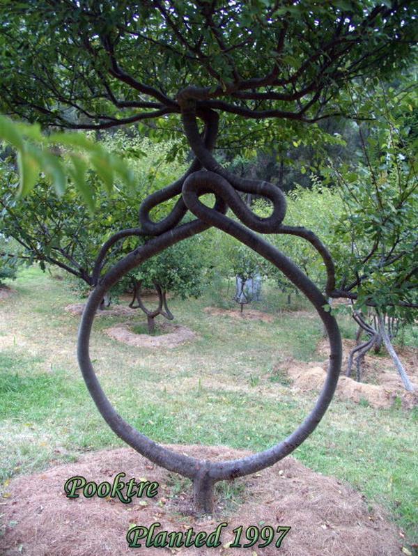 Stunning Art of Arborsculpture-20