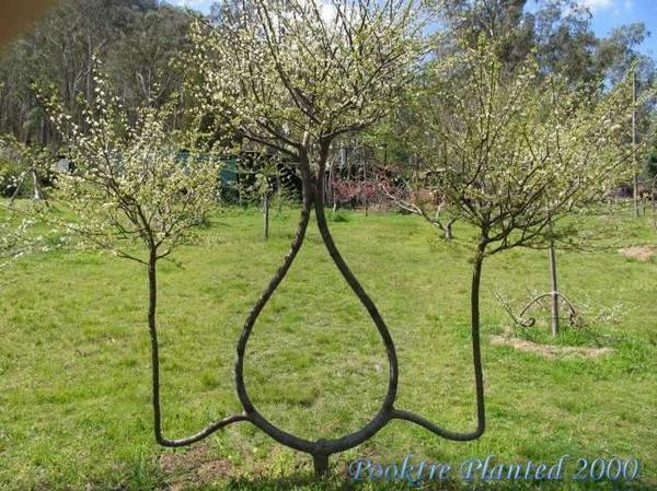 Stunning Art of Arborsculpture-21