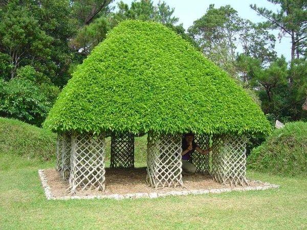 Stunning Art of Arborsculpture-4