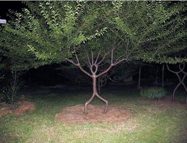 Stunning Art of Arborsculpture-7