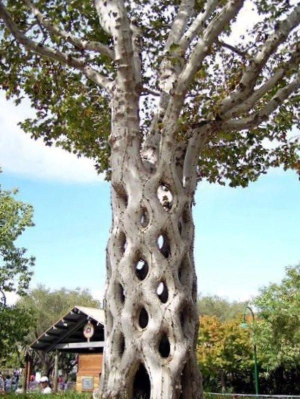 Stunning Art of Arborsculpture1
